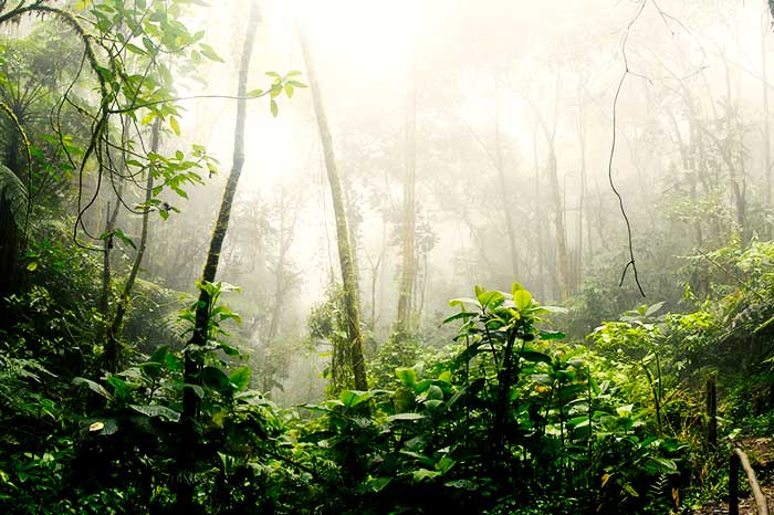 CAF protects 300,000 hectares of the Peruvian Amazon and neutralizes greenhouse gas emissions emitted since 1970
